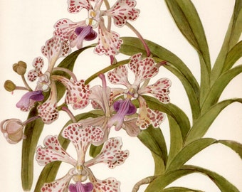 VINTAGE ORCHID PRINT Purple Vanda Orchid 1972 Gallery Wall Art Home Decor - Perfect Gift for Wedding, Birthday, Graduation (Orchid 55)
