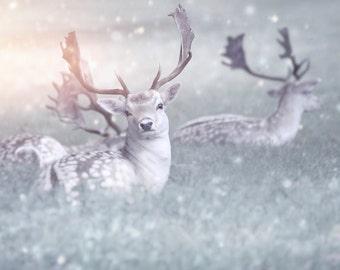 Nature Photography, Fallow Deer, Snowy, Winter, Wall Art, Home Decor.