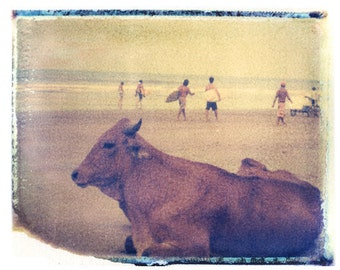 Surf Art Print Cow on the Beach Surf Photography Polaroid Transfer  Surf Ocean 11x14 Print