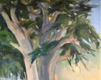 Carmel cypress near Beach