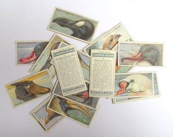 Curious Beaks, John Player cigarette cards: pack of 20 bird cards from 1929. Collectible ephemera or altered art, mixed media, craft OT677