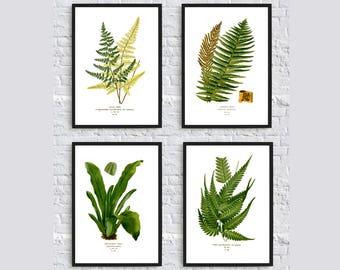 Beautiful fern print Botanical illustration print forest print plant nature wall art decor dorm room decor living room decor SET OF 4 green