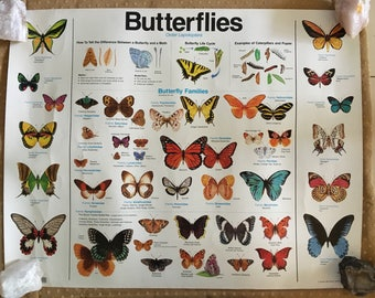 2 Lovely Vintage Teaching Aid Educatuon Butterfly Posters