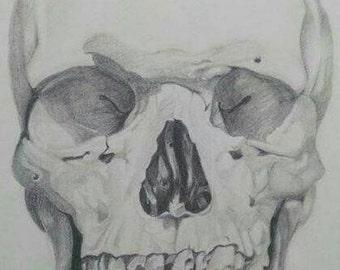 Anatomical Skull Illustration