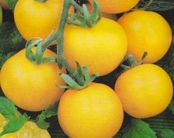 Yellow Perfection Tomato Heirloom Garden Seed  Non-GMO Naturally Grown Open Pollinated 30+ seeds Gardening