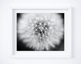 Black and White Photography, Dandelion photo, Floral art, Nature home decor - Girlfriend photo gift - Large wall art - Framed photos -Canvas