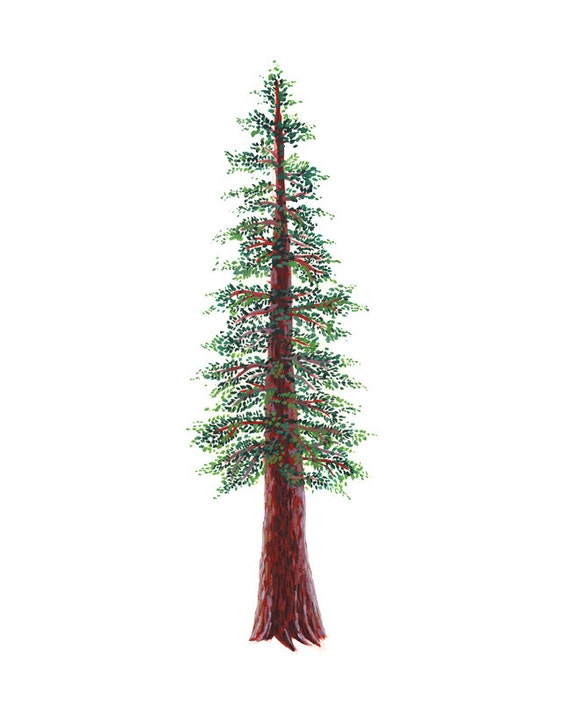 Redwood Tree Art Print watercolor and gouache reproduction Redwood Tree Painting