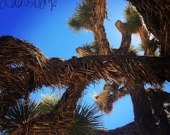 Joshua Tree Morning