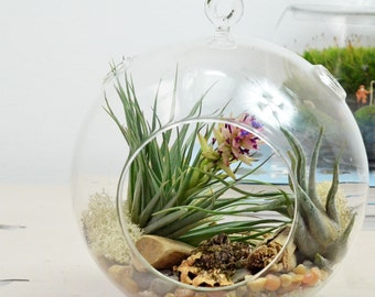Air Plant Terrarium// Large Glass Orb// Natural// Living Home Decor// Green Gift