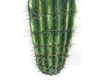 Cactus Exclamation Drawing- Limited Edition Print