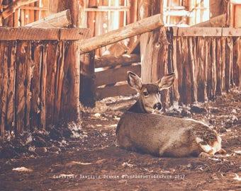 Nature Print | Animal Photo | Deer Photograph | Rustic Home Decor | Oregon Photo | Wildlife Print | Eastern Oregon Photography