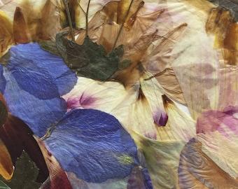 "Flower 06.17 Giclee Print 11""x14"""