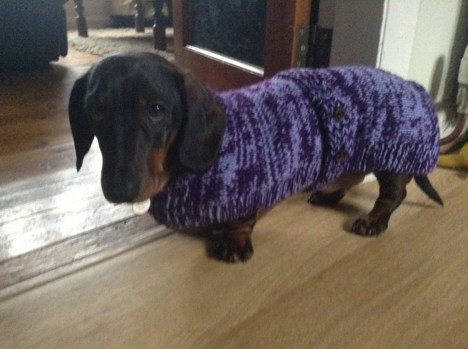 Modern Free Knitting Pattern For Dachshund Coat Ideas - Sewing ...