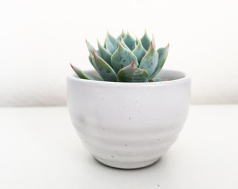 Off-White Tiny Speckled Round Miniature Succulent Planter Pot Kits