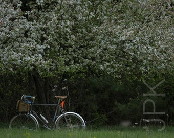 Bicycle with Flowering Crabapple Tree