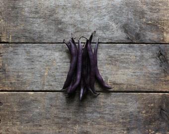 Royal Purple Bush Bean, organic vegetable seeds, heirloom vegetable seeds, organic gardening, green bean seeds, heirloom bean seeds, garden
