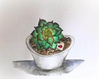 "Sculent Watercolor painting Original 11""x14"""