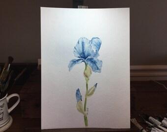 Watercolor blue iris