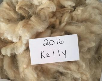 Raw Wool Fleece CVM/Shetland-Creamy White