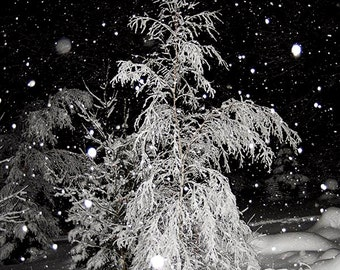 Winter Tree Photograph,Picture of Trees in Winter,Photo of Tree,Winter Tree Photograph,Trees in Snow,Snowy Tree Landscape ,Night Snow Storm