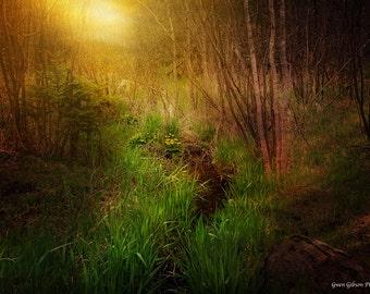 Enchanted Forest Art, Woodland Photograph, Forest Photograph, Magical Photography, River Photograph, Enchanted Valley, Enchanted Woodland