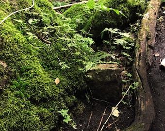 Bruce Peninsula // Greig's Caves // Original Photography // 5 of 5 Series