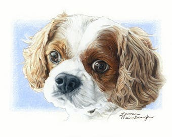 Print of Cavalier King Charles Spaniel Drawing