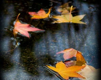 Autumn Leaves in water Fine art photography Autumn Orange yellow maple leaves Abstract photography Fall leaves Nature photography print
