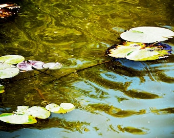 Antique Lily Pads on Water