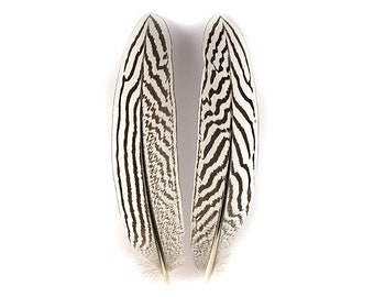 Silver Pheasant Wing Feathers(2) 12203