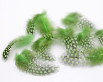 10 x Guinea Fowl Feathers Green - Card Making Craft Millinery