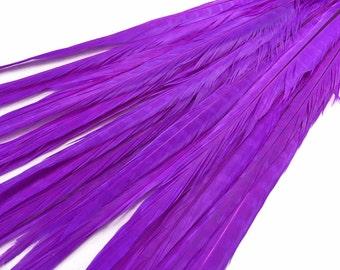 """Purple Feathers, 50 Pieces - 20-22"""" PURPLE Ringneck Pheasant Tail Wholesale Feathers (bulk) : 3667"""