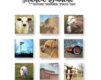 Farm yard photo set, Rustic print set,  Farm house art Set, Barnyard decor, Farm Animals Cow Horse Llama Barn Hay Animals Art Set of Nine