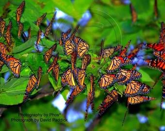 Butterfly Migration - Fine Art Photography