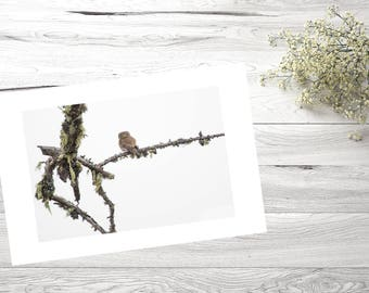 30X40, Nature, Photography, Bird, Wildlife