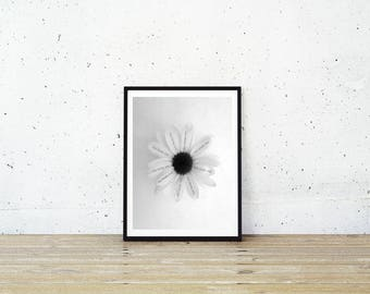 He Loves Me Not Print, Daisy Flower Print, Love Quote, Flower Print, Daisy Print, Instant Print, Flower Wall Art, Flower Art, Flowers