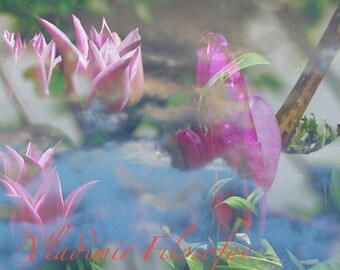 "Photo Art Paris ""Spring flowers"""