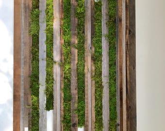 Hanging  garden / Moss art
