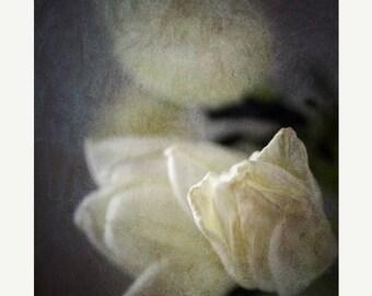 20 Percent Off Sale White Rose photograph, flower print, shabby chic, home decor, Fine Art Photograph valentines day