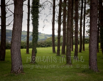 Moments In Time Welsh Forest Digital Background