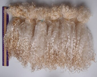 Teeswater raw wool long locks 10-12 in  50/100 gr unwashed white cream fiber/curly Doll Hair felting fur collar spinning locks lafiabarussa