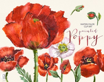 Aquarelle watercolor red wild poppies, floral clip art, flowers, poppy, vintage invitation, decoration, skin, papers, card, diy stationery