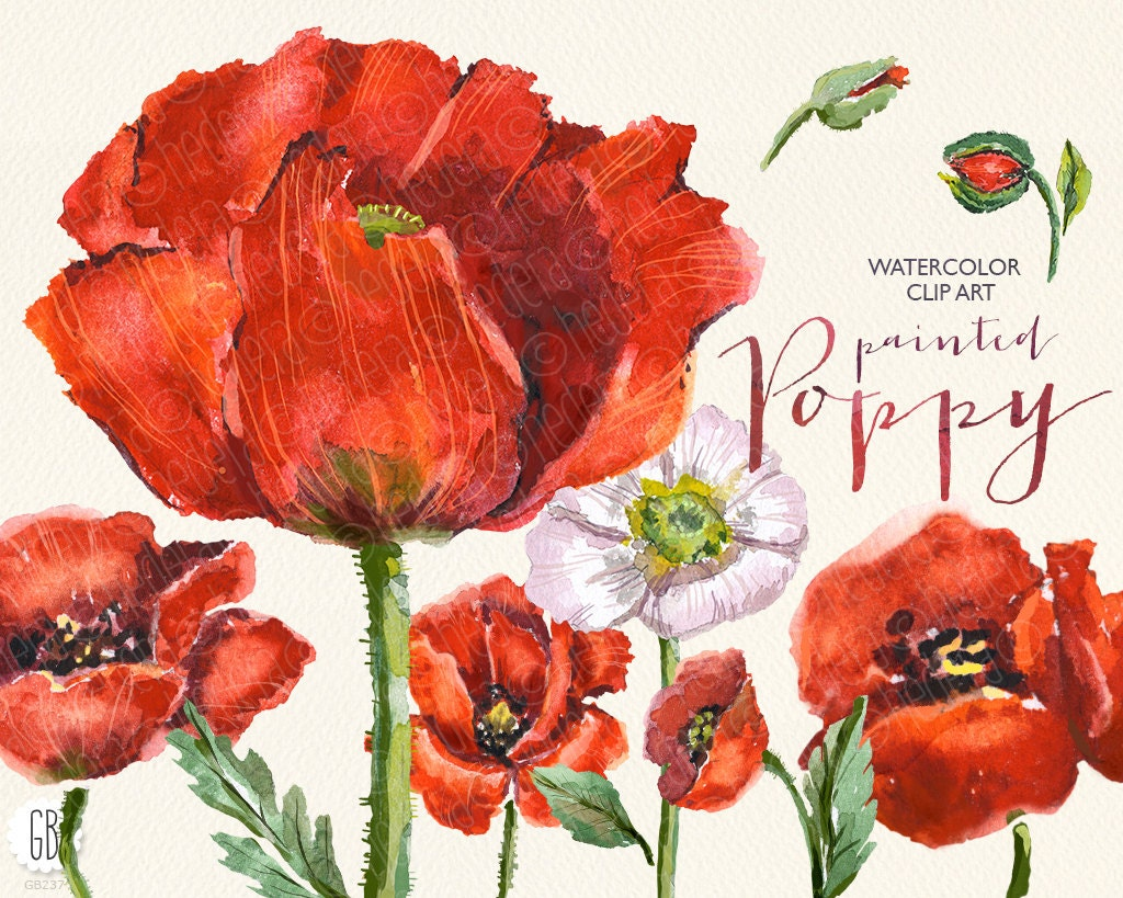 Aquarelle Watercolor Red Wild Poppies Floral Clip Art