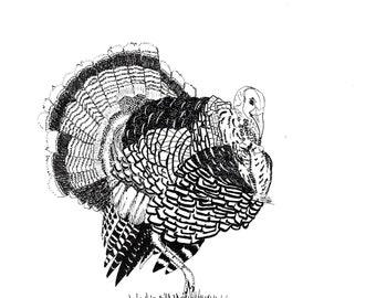 Turkey print