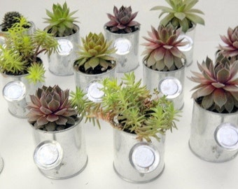 25 Succulent Shower favors, Rock Your Party  with Mini Sprinkling Watering Cans  for FavoRs, bridal showers, baby showers,