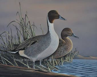 Pintail Duck Print by Doug Walpus, Waterfowl, Birds, Cabin Decor, Wall Art, Office Decor, Gift for Hunter, Art and Collectibles