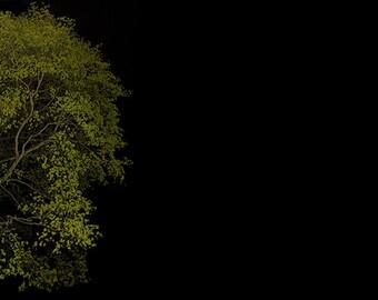 Maple Bloom Blossom Petal Green Yellow Fluorescent Neon Black Glowing Nightshot Tree Light Fine Art Photography Photo polychromatophil