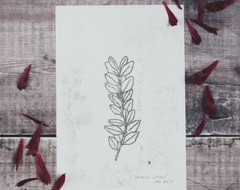 Botanical monotype print: Mono Stem