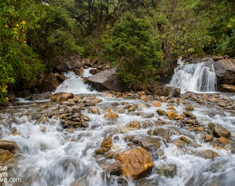 Rushing River in the Cloud Forest