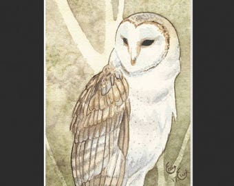 Barn Owl Print (Matted)